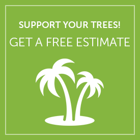 Get a Free Tree Cabling or Tree Bracing Estimate