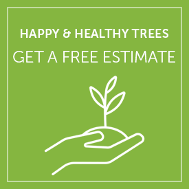 Get a Free Tree Consultation Quote