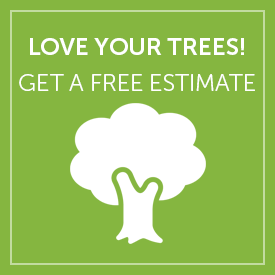 Get a Tree Service Estimate